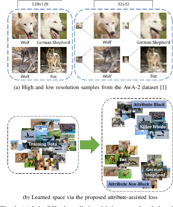 Figure 1 for Enhancing Fine-Grained Classification for Low Resolution Images