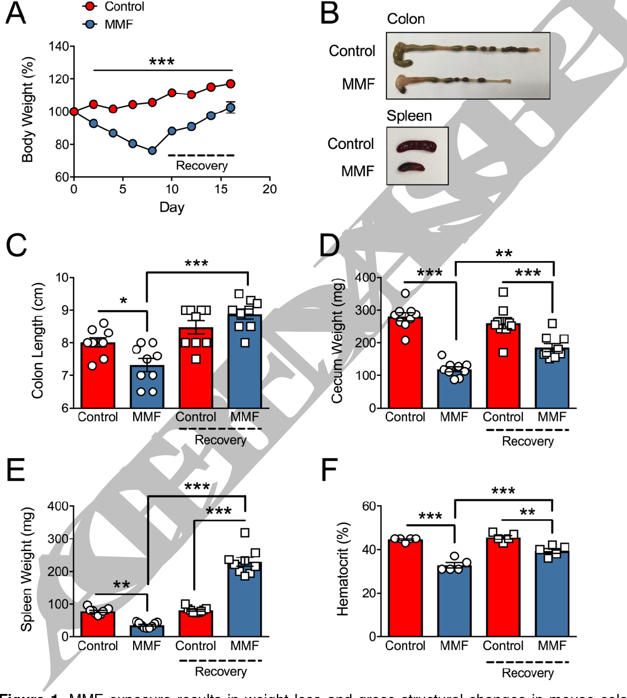 Figure 2 from An intact microbiota is required for the
