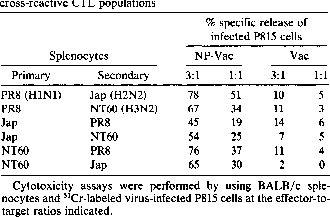 Table 1. Recognition of NP-Vac-infected cells by a number of cross-reactive CTL populations