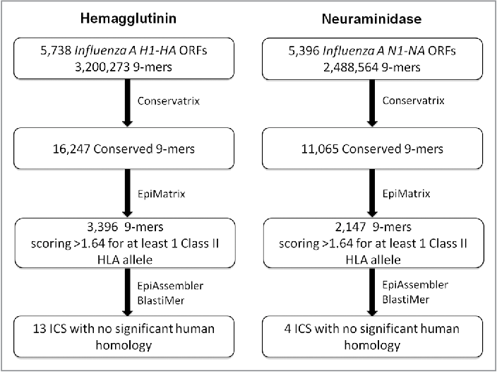 PDF] Universal H 1 N 1 influenza vaccine development - Semantic Scholar