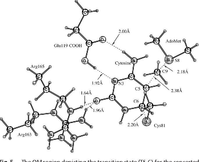 Figure 5 From The Mechanism Of M Hhai Dna C5 Cytosine
