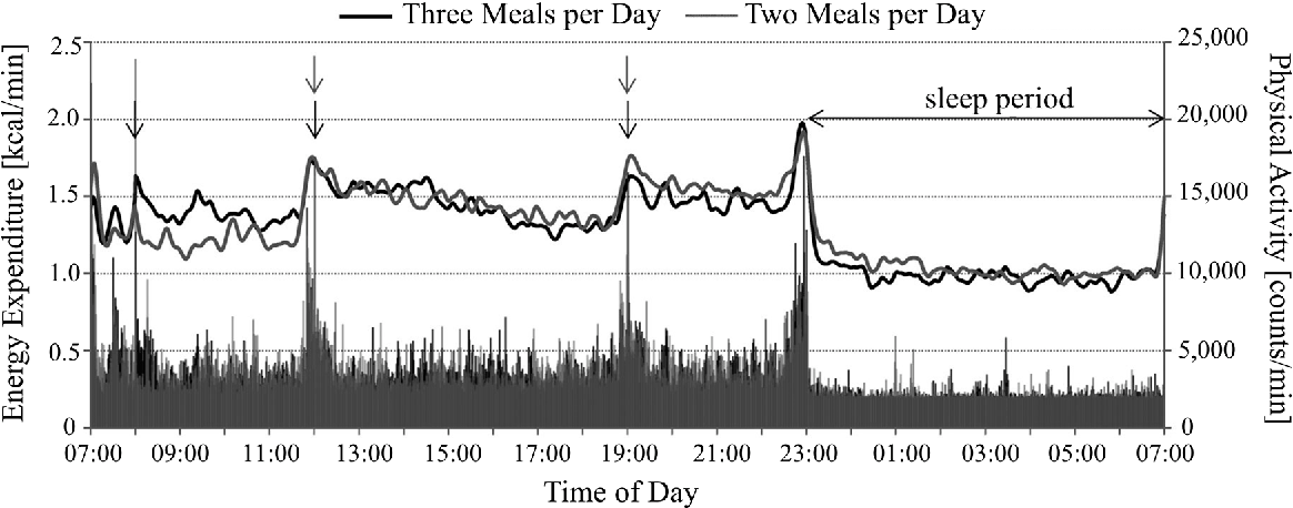 Figure 2. EE and physical activity measured under conditions of two and three meals per day. Arrows indicate meal times. Adapted from [107].