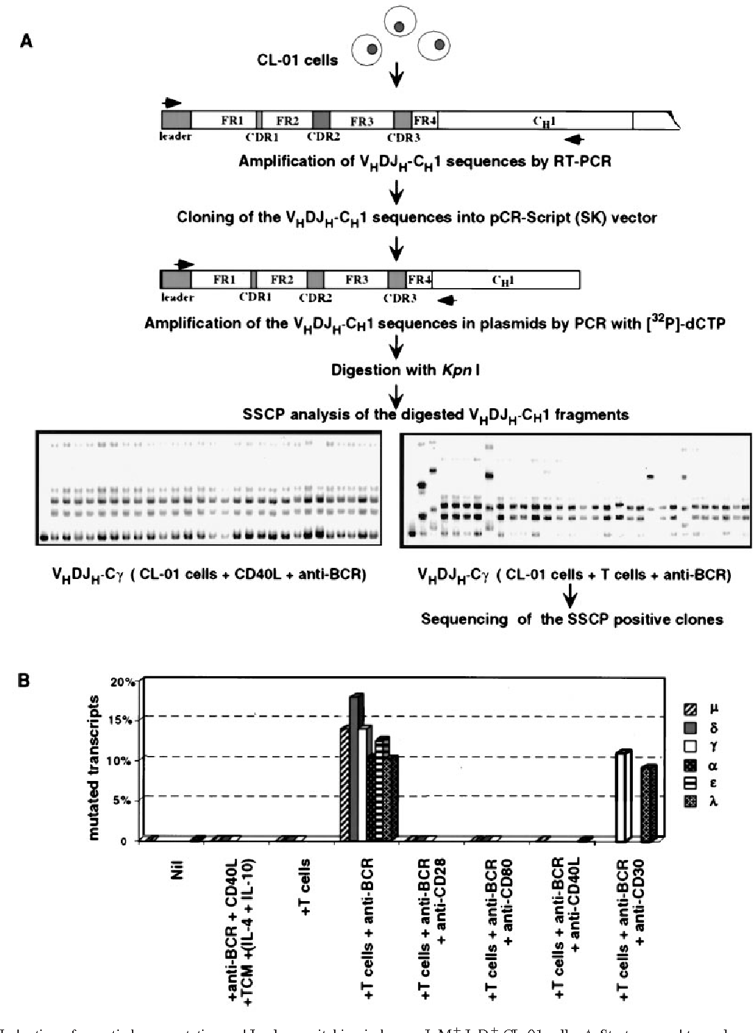 hypermutation requirements and modalities of b cell line in vitro