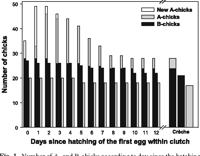 Fig. 1 Number of A- and B-chicks according to day since the hatching of the Wrst chick within the clutch in experimental nests (A-, B- and AB-nests pooled all together). Left bar A- and B-chicks with a sibling at their hatching date. Middle bar B-chicks without sibling at their hatching date. Right bar A-chicks without sibling at their hatching date. A-chicks with a B-sibling are represented in open bars for the day when they hatched and in grey bar afterwards in order to highlight the high mortality early in the brood period