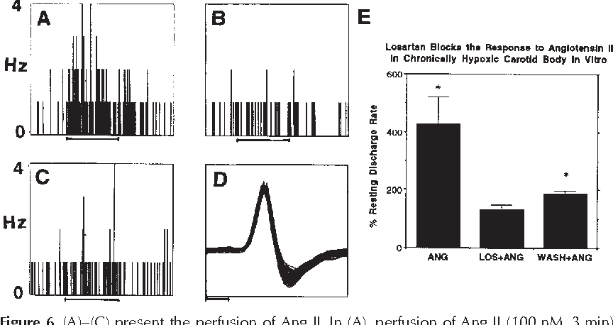 Chronic Hypoxia Upregulates The Expression And Function Of At1