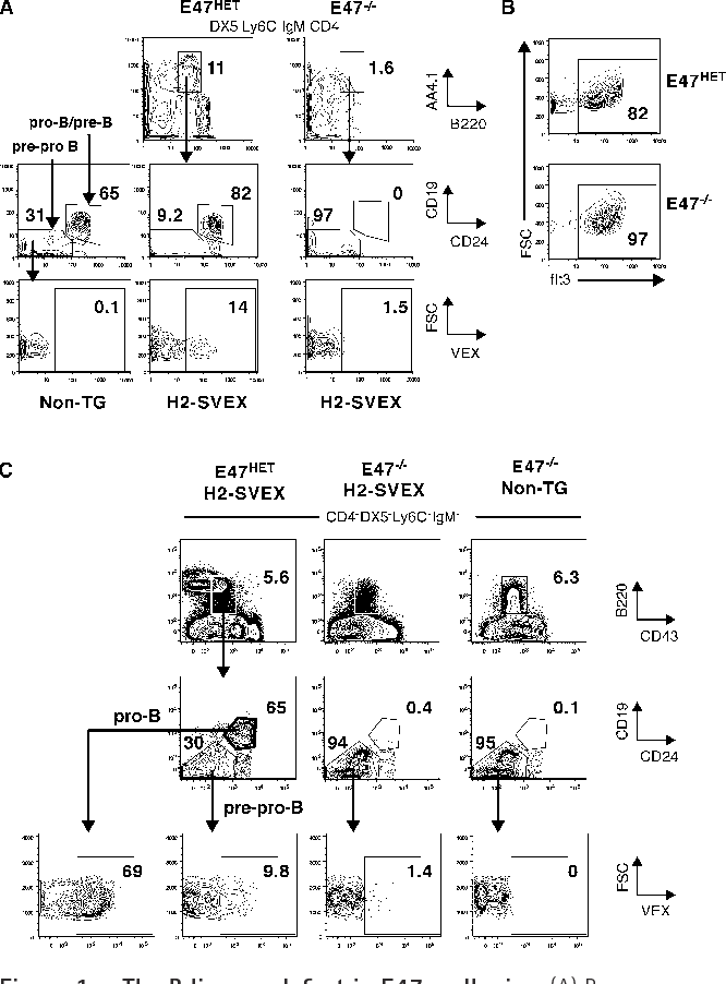 Figure 1 From E47 Is Required For Vdj Recombinase Activity In