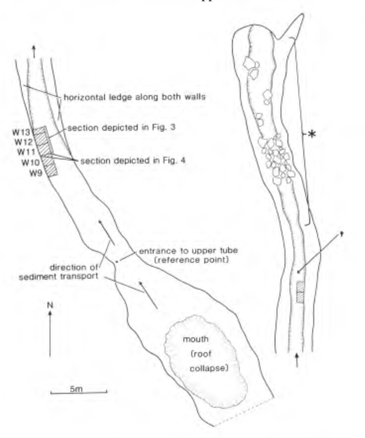Figure 2 From Evolution Radiocarbon Dates On Bones Of Extinct Birds