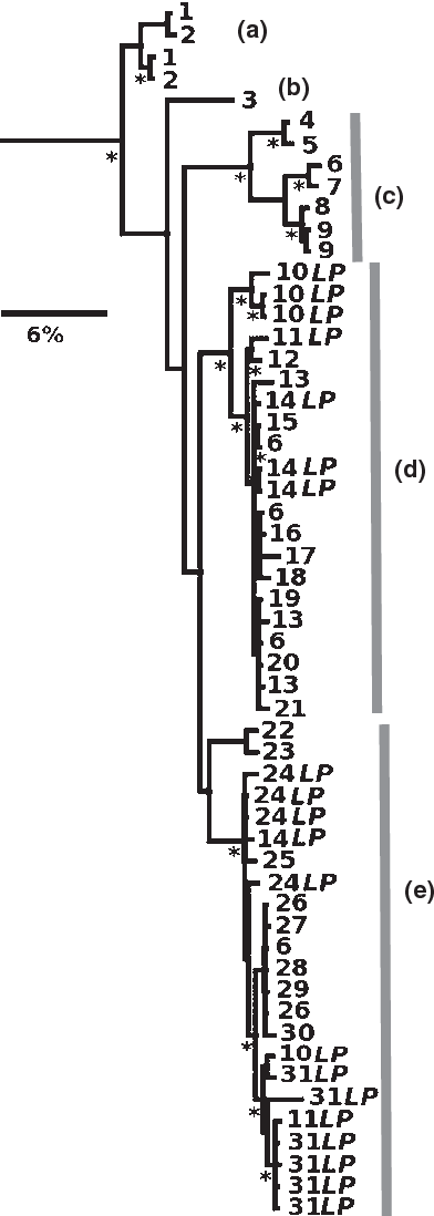 Fig. 3 Phylogenetic ML of preliminary mtDNA screen of largebodied population (LP) specimens. Stars represent nodes highly supported by both ML bootstrap support (> 70) and Bayesian posterior probability (> 95%). Numbers refer to collection locations (Fig. 2, Appendix S1), and letters designate major clades referred to in the text. Samples labelled 'LP' refer to LP.