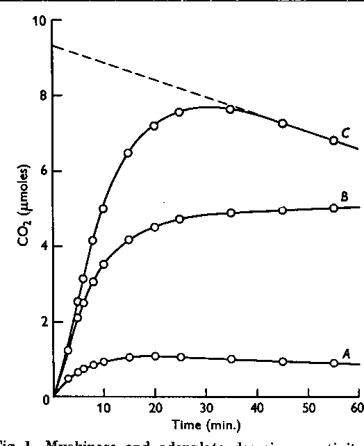 Fig. 1. Myokinase and adenylate deaminase activity of mammary tissue. The reaction mixture contained MgCl2, O-1M; glucose, 0-02M; fluoride, 0-005M; iodoacetate, 0-001 M; KHCO2, 0-0024M; ATP, 13-2 smoles of labile P (Plo-PO). Volume, 2-0 ml. Temp., 300. Gas: C02 +N2 (5:95). A, Guinea-pig mammary acetone-dried powder extract, 0-5 ml.; B, yeast hexokinase, 9 units; C, mammary extract + yeast hexokinase.