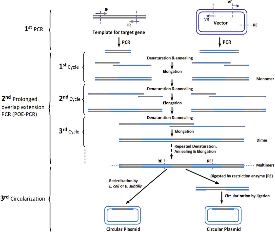 2 flow schemes of simple cloning by poe-pcr and generation of circular