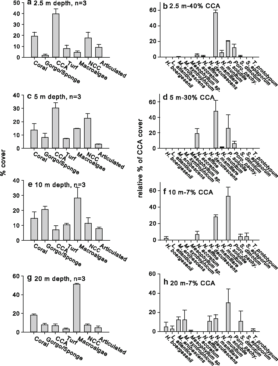 Larval settlement preferences of acropora palmata and montastraea figure 1 pooptronica