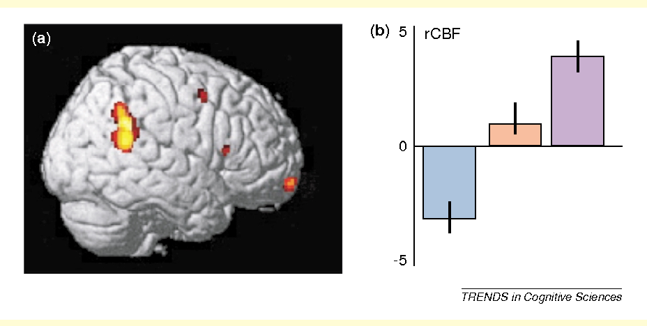 Brain Representations Of Social >> Shared Representations Between Self And Other A Social Cognitive