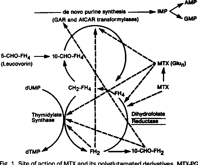 Figure 1 From Concepts In Use Of High Dose Methotrexate Therapy