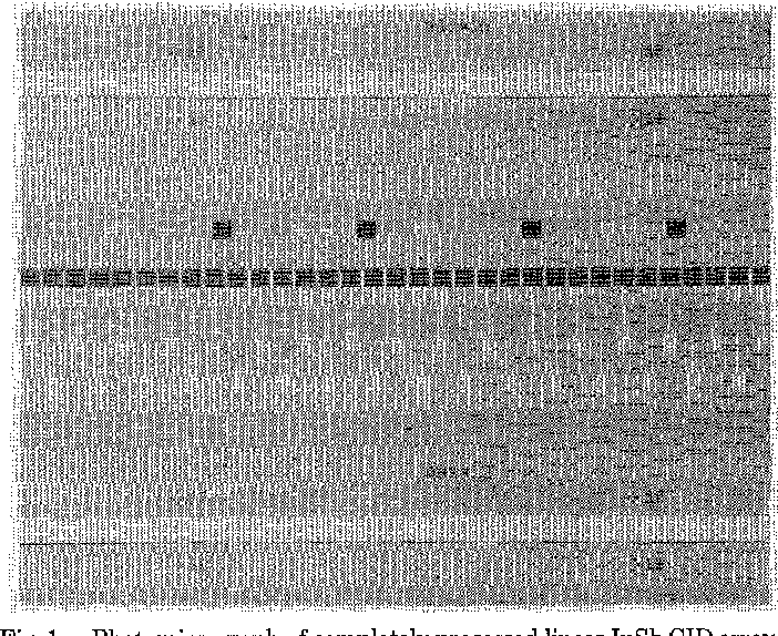 Fig. 1. Photomicrograph of completely processed linear InSb CID array. The small dark areas are the active array resolution elements (4X 4 mils on 5-mil centers) and the whitish regions represent the contact lead patterns.