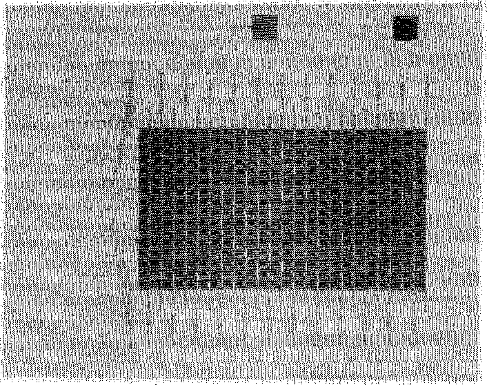 Fig. 8. Photomicrograph of completely processed 16 X 24 two-dimensional InSb CID array. The resolution element is 2 X 2 mils, spaced on 3-mil centers in the horizontal direction and 2.6-mil centers in the