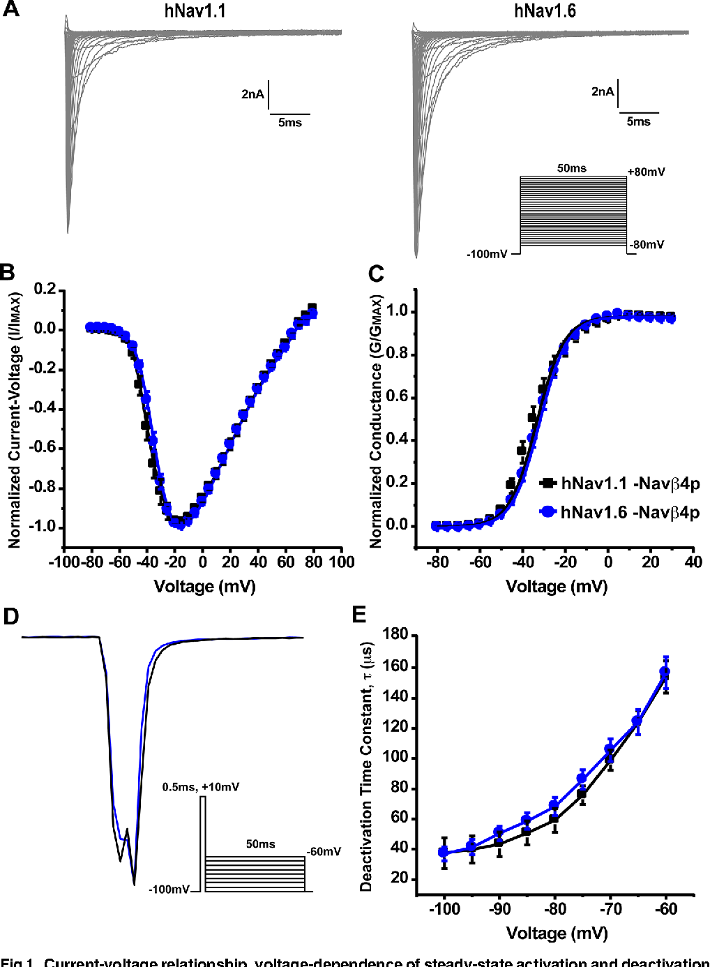 Figure 1 From Human Nav16 Channels Generate Larger Resurgent To The Left Is A Diagram For Generation Of Electricity Fig Current Voltage Relationship Dependence Steady State Activation