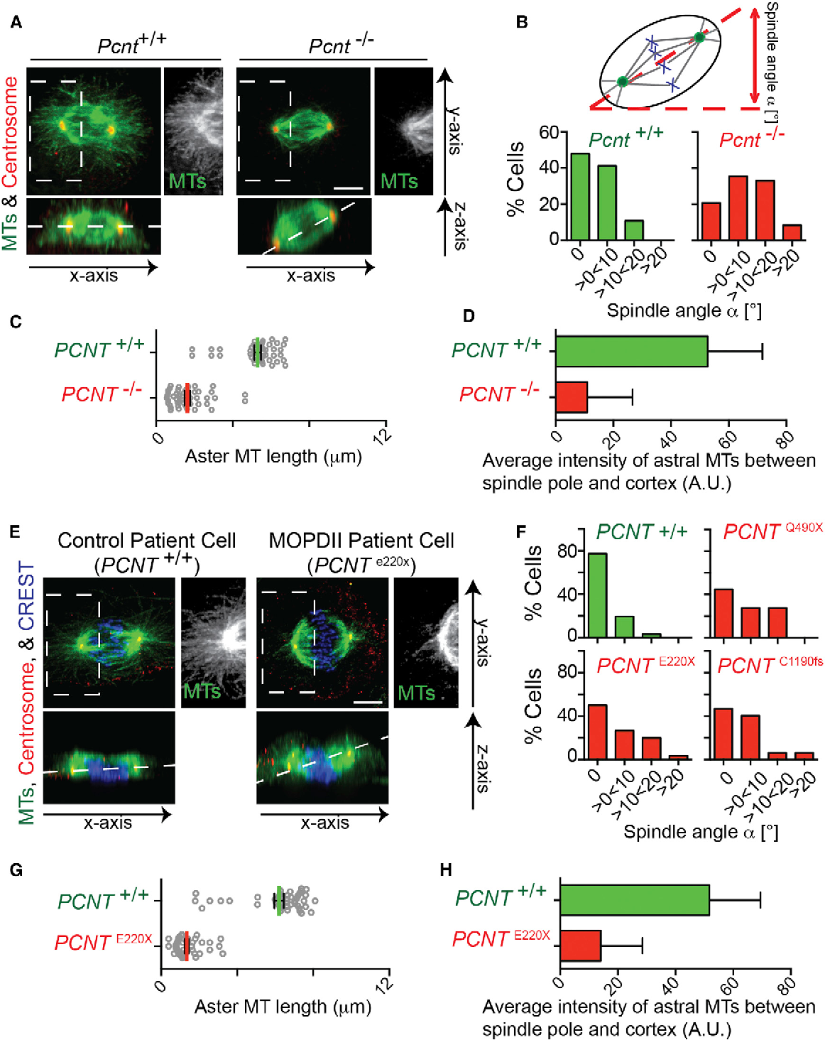 A Unique Set of Centrosome Proteins Requires Pericentrin for