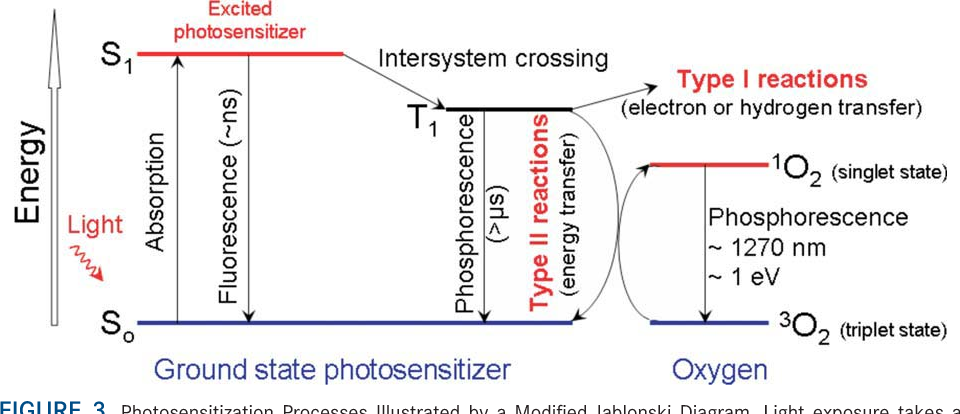 Figure 3 from photodynamic therapy of cancer an update semantic photosensitization processes illustrated by a modified jablonski diagram light exposure takes a ccuart Choice Image