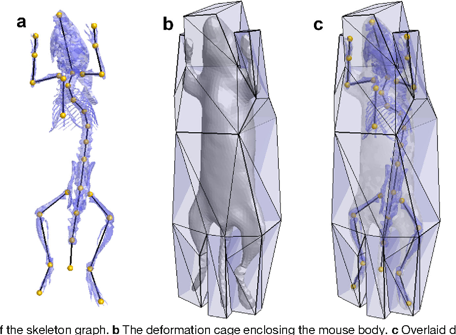 A Deformable Atlas Of The Laboratory Mouse Semantic Scholar