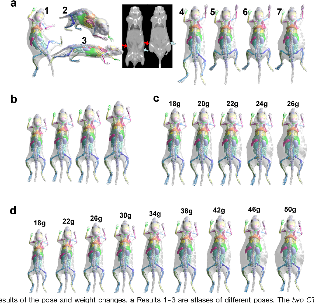 A Deformable Atlas of the Laboratory Mouse - Semantic Scholar