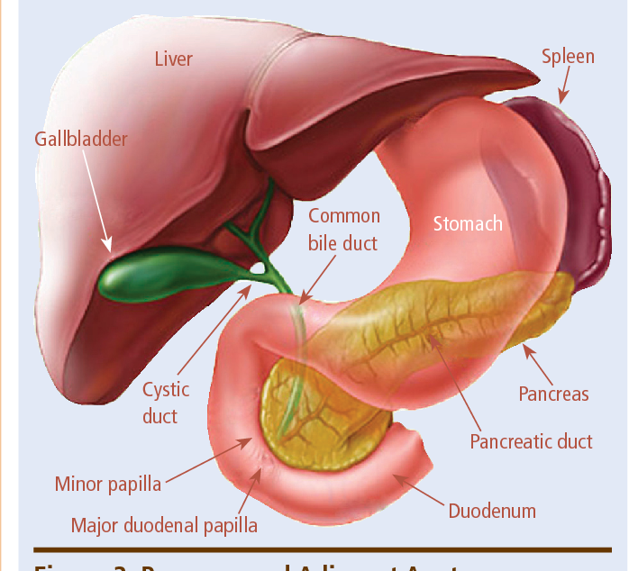 Figure 2 From Pancreatic Cancer A Review And Update Semantic Scholar
