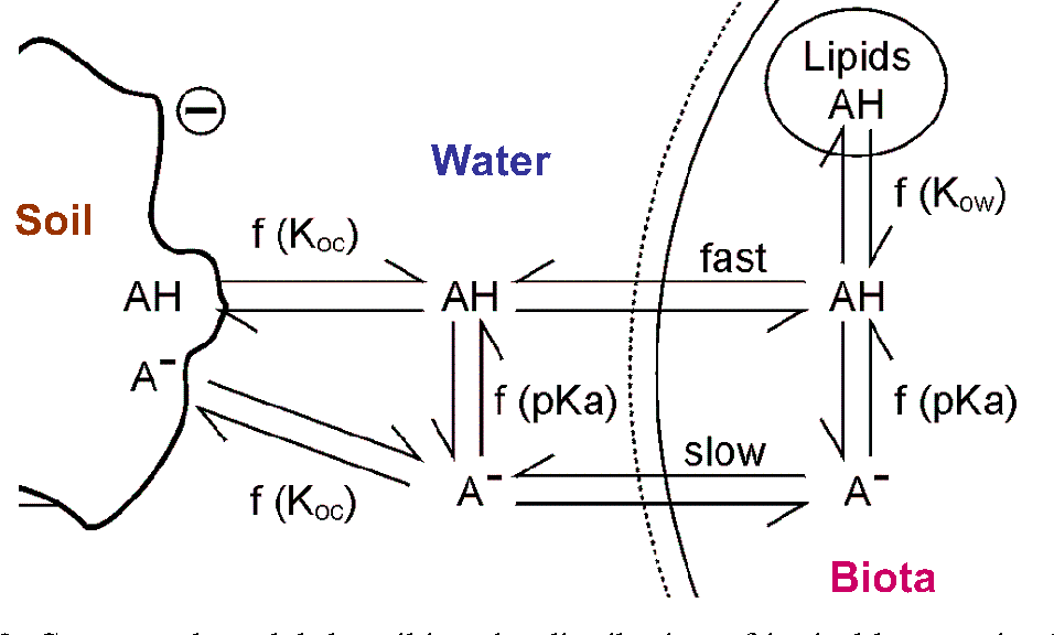 Figure 3. Conceptual model describing the distribution of ionizable organic chemicals between solid, water and biota (source: Trapp 2000)