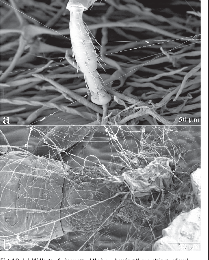 Figure 13 from Low Temperature–Scanning Electron Microscopy to