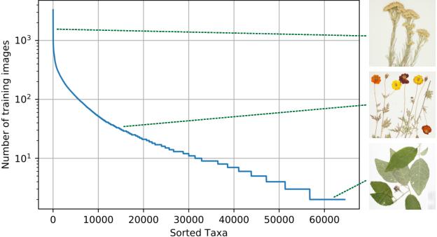 Figure 1 for The Herbarium 2021 Half-Earth Challenge Dataset