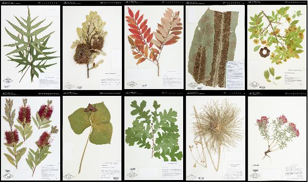 Figure 3 for The Herbarium 2021 Half-Earth Challenge Dataset