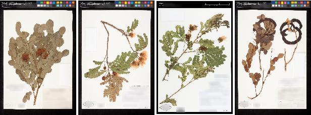 Figure 4 for The Herbarium 2021 Half-Earth Challenge Dataset