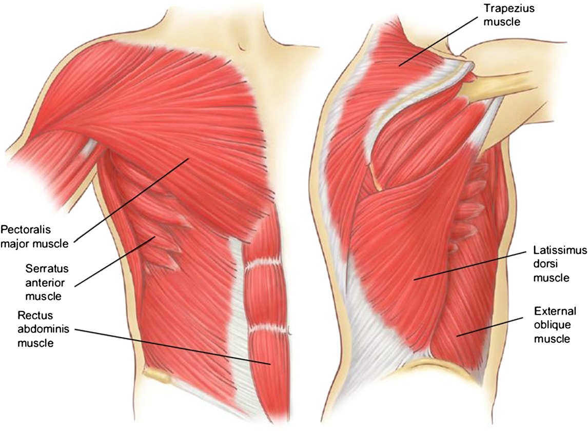 Figure 7 From Relevant Surgical Anatomy Of The Chest Wall