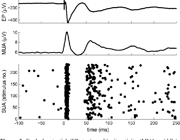 Figure 3. Evoked potential (EP, top), multiunit activity (MUA, middle), and single unit activity (SUA, bottom) recorded in S1 in response to a 50- µA stimulus pulse to the CN. Each dot in the SUA plot represents an action potential. Stimuli were delivered once every 5 s. The average response to the 237 stimuli is shown for the MUA and EP.