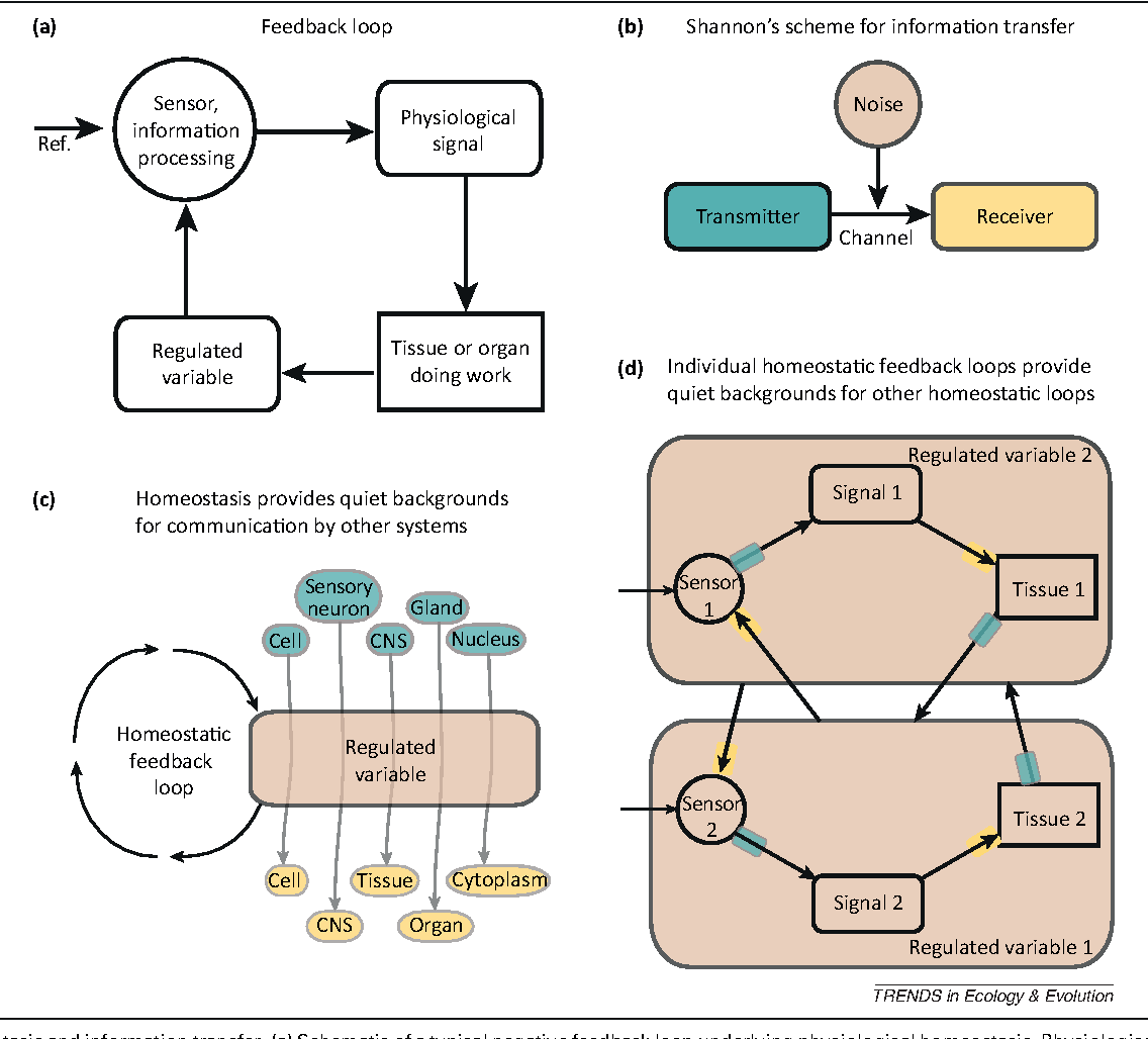An Information Hypothesis For The Evolution Of Homeostasis