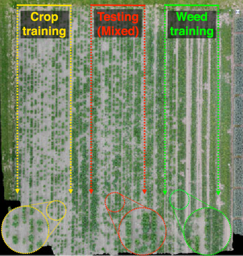 Figure 4 for weedNet: Dense Semantic Weed Classification Using Multispectral Images and MAV for Smart Farming