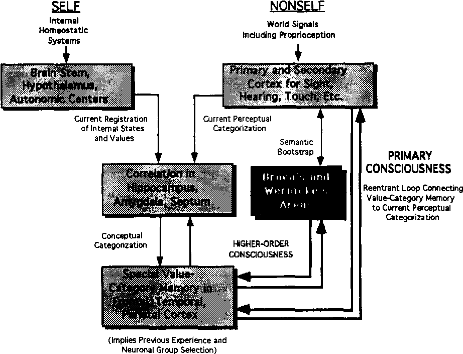 The Biology Of Consciousness Comparative Review Of Israel