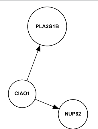 Figure 2 From Cytosolic Iron Sulfur Protein Assembly 1 Ciao 1