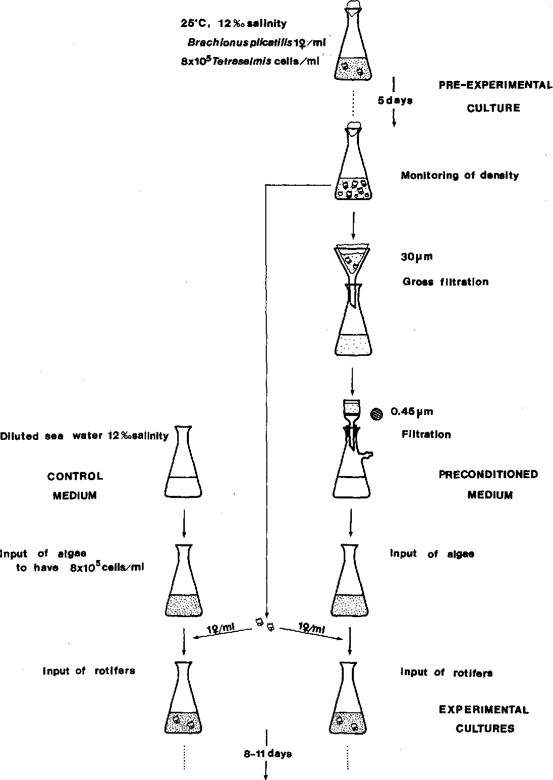 Fig . 1 . Diagram of the experimental procedure for Experiment 1 .
