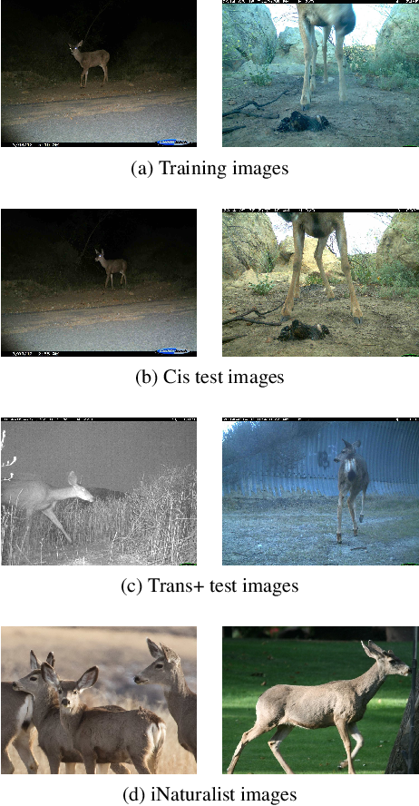 Figure 3 for Synthetic Examples Improve Generalization for Rare Classes
