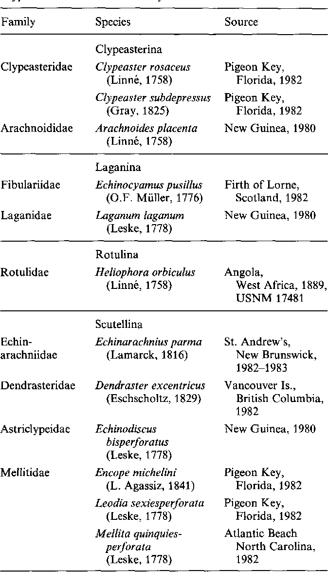 Table 1 from Non-respiratory podia of clypeasteroids (Echinodermata ...