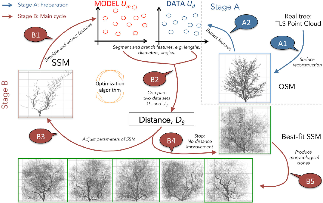 PDF] Bayes Forest: a data-intensive generator of morphological tree
