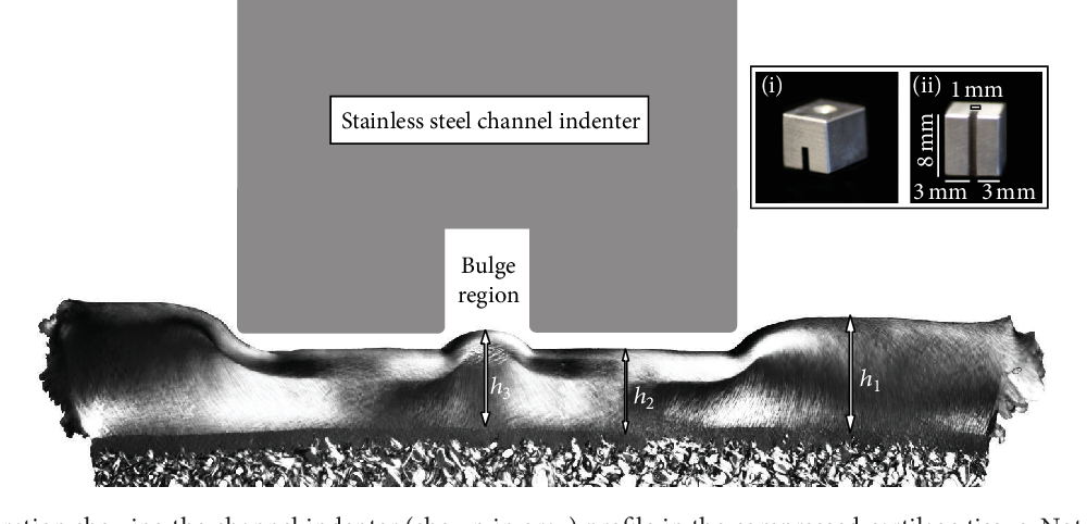 Figure 2: An illustration showing the channel indenter (shown in gray) profile in the compressed cartilage tissue. Note the tissue bulge in the channel space (bulge region). Microimages from each sample were used to measure ℎ 1 : the unloaded thickness, ℎ 2 : the directly loaded thickness, and ℎ 3 : the bulge height, in order to calculate the normal axial strain and bulge strain. Inset: photo of the steel channel indenter and its dimensions, with the indenter (i) upright and (ii) showing the underside.