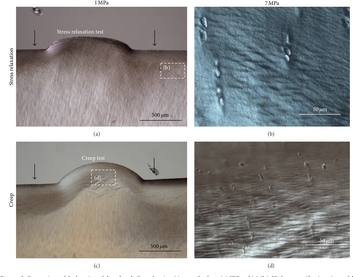 Figure 5: Comparison of the location of shear bands (boxed regions) in samples from (a) SR7 and (c) Cr1. Higher magnification views of the boxed regions are shown in (b) and (d), respectively. DIC imaging.