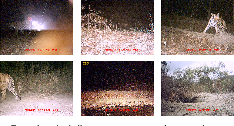 Figure 1 for Automatic Detection and Recognition of Individuals in Patterned Species