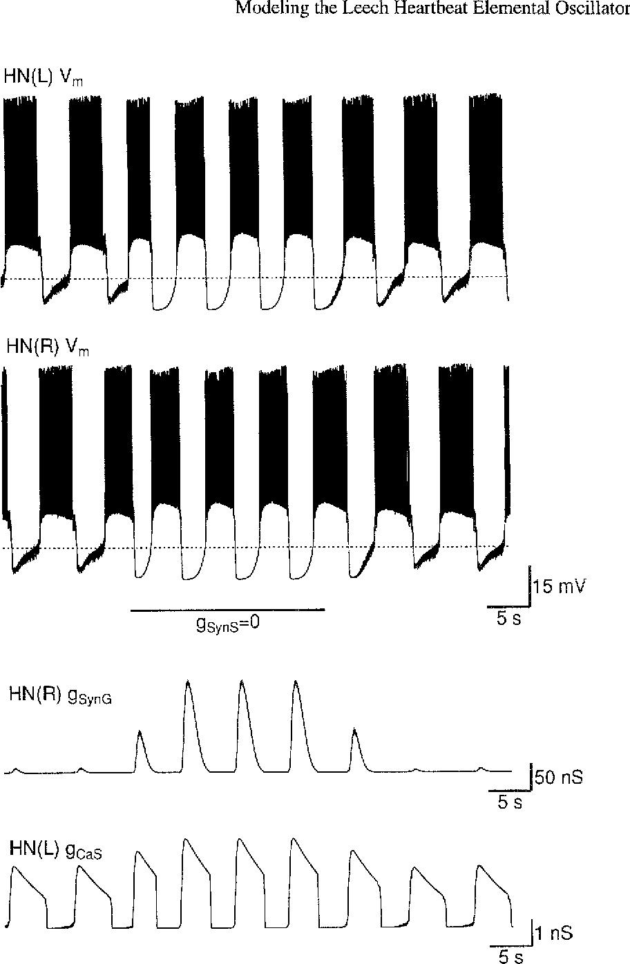 Figure 2 from Modeling the leech heartbeat elemental oscillator II