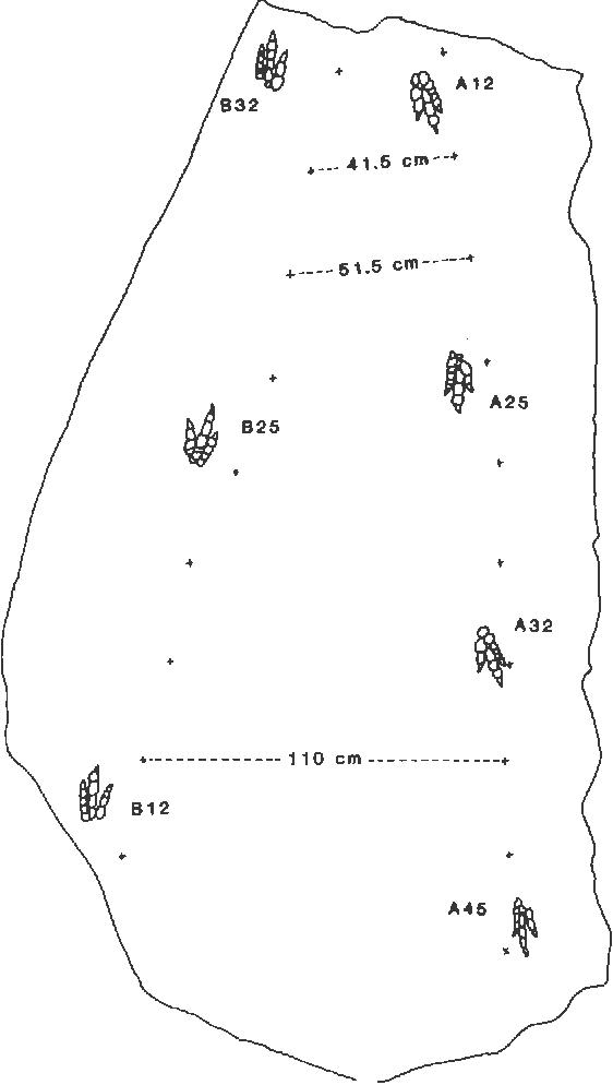 figure 24.4