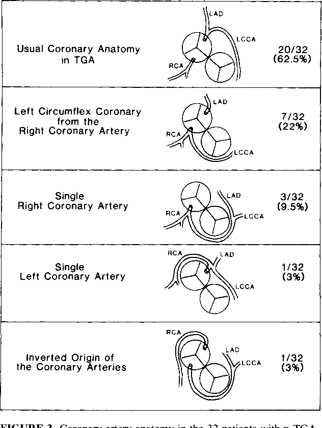 Diagnosis of coronary artery anatomy by two-dimensional ...