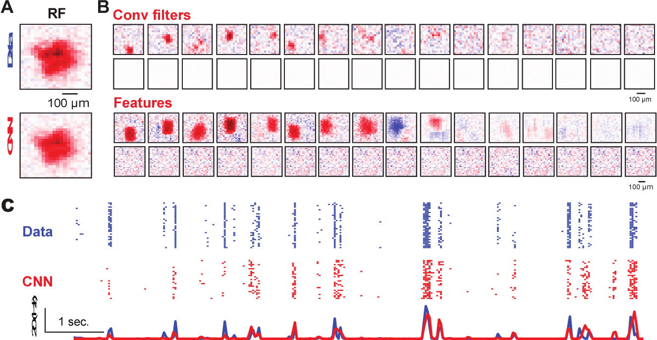Figure 4 for Revealing Fine Structures of the Retinal Receptive Field by Deep Learning Networks