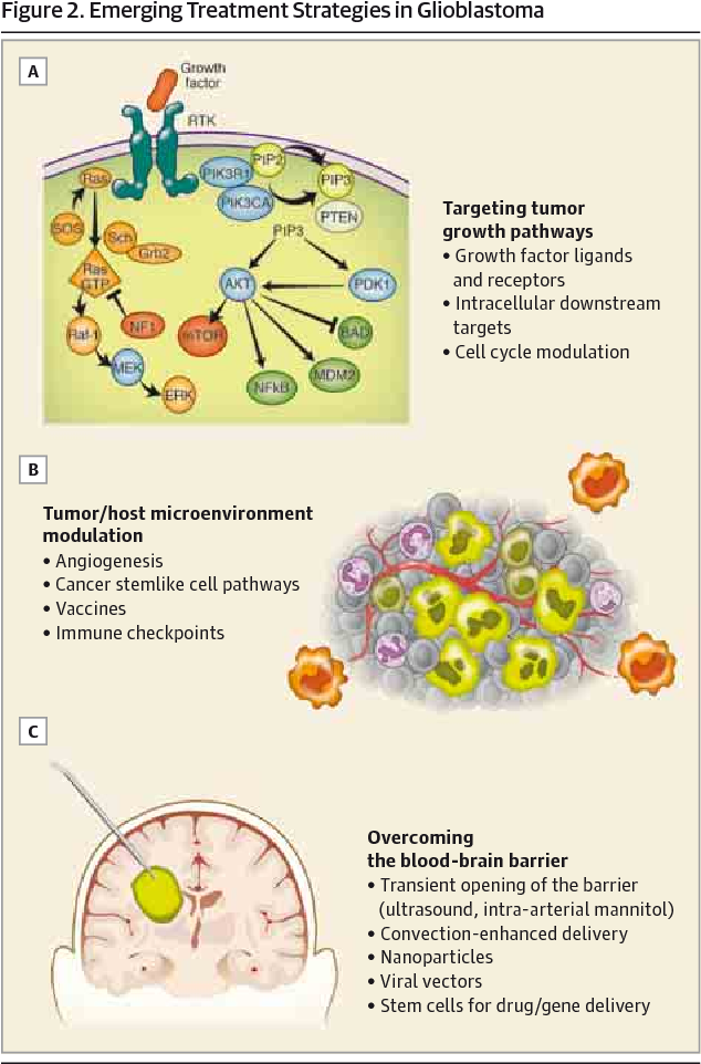 Figure 2 from Emerging therapies for glioblastoma