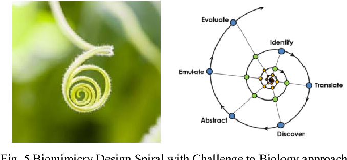 A Biomimetic Structural Form Developing A Paradigm To Attain Vital