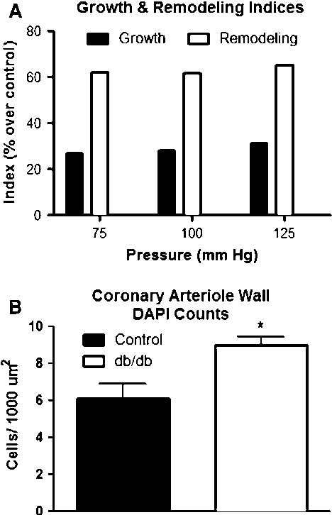 Fig. 3 Increased remodeling index and decreased growth index of isolated coronary arterioles under physiological pressures of 75, 100 and 125 mmHg (a). These indices are calculated as a percent over the averaged control; thus only db/db values are plotted and statistics are not performed. Coronary arteriole wall cell numbers were increased in db/db coronary arterioles when compared to control. Formalin fixed (constant gravity-fed perfusion) hearts were stained with a-smooth muscle actin and counter stained with DAPI. Cells with positive staining for both a-smooth muscle actin and DAPI were counted and then normalized to medial cross sectional area. Cumulative data from n = 4 (b).Values are mean ± SEM, *p \ 0.05 versus control